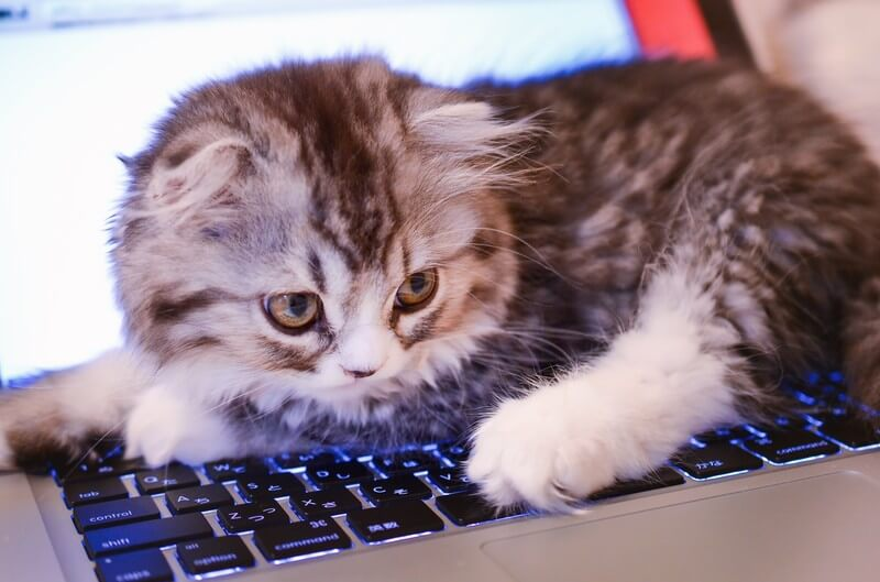 キーボードの上に居座る猫